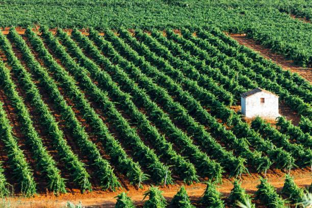 Vineyards landscape - Sicily stock photo