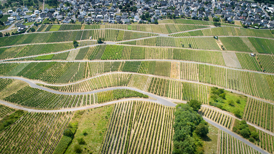 Vineyards, Mosel valley, Germany