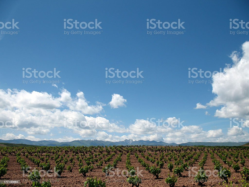 Vineyards, Mountains and Sky royalty-free stock photo