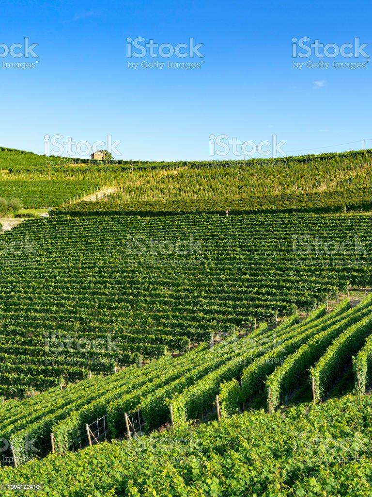 Vineyards near Barolo, Cuneo, in Langhe - foto stock