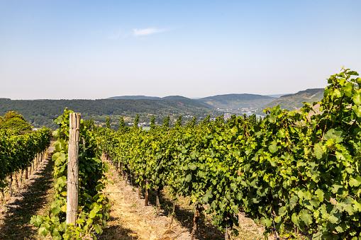 Vineyards near Bernkastel-Kues