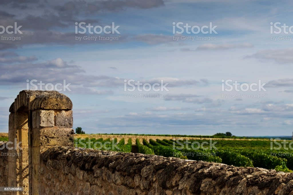 Vignoble près de Bordeaux - Photo