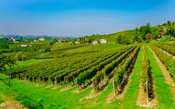 Vineyards near Canelli (Asti, Piedmont, Italy). stock photo