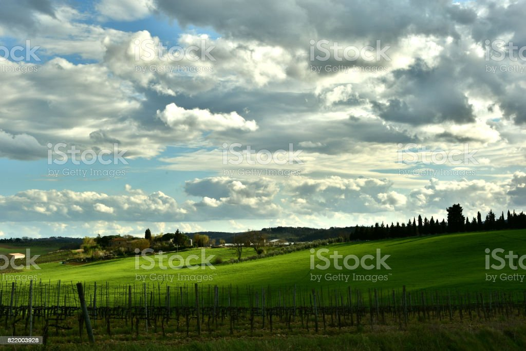 Vineyards near Castellina in Chianti (Siena) with dramatic cloudy sky. Italy. stock photo