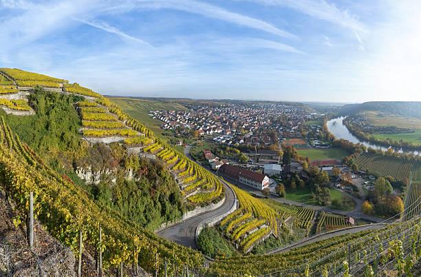 vineyards near mundelsheim, germany - robert weinberg stock-fotos und bilder