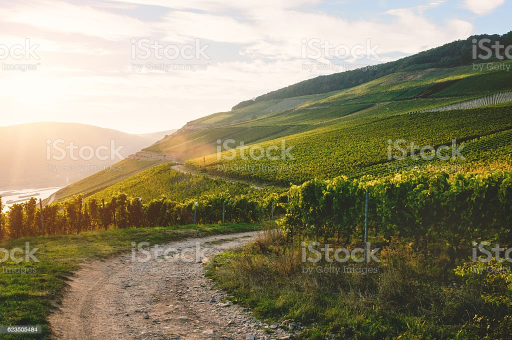 Vineyards near the Niederwald Monument by sunset stock photo