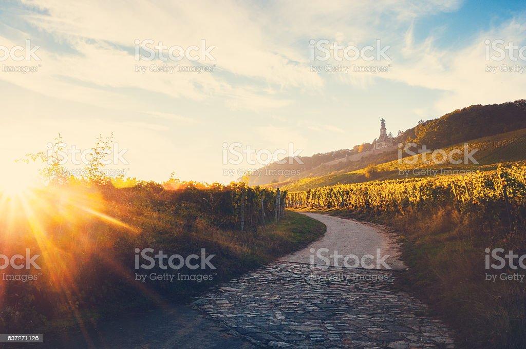 Weinberge in der Nähe des Niederwalddenkmal bei Sonnenuntergang Lizenzfreies stock-foto