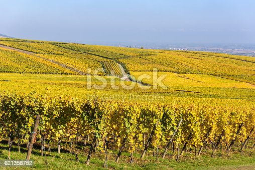 925850210 istock photo Vineyards of alsace - close to small village Hunawihr, France 621358752