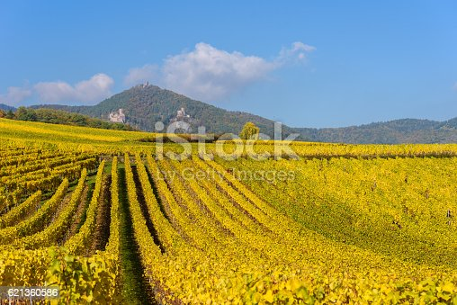925850210 istock photo Vineyards of alsace - close to small village Hunawihr, France 621360586