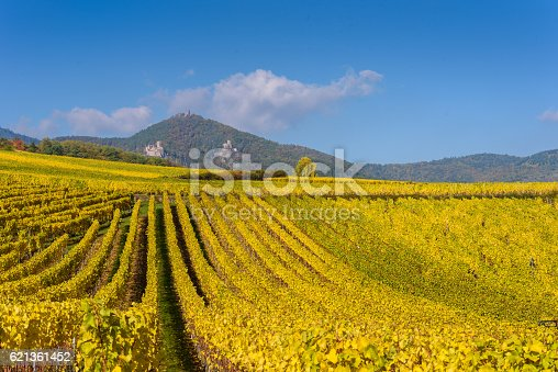 925850210 istock photo Vineyards of alsace - close to small village Hunawihr, France 621361452
