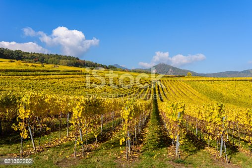 925850210 istock photo Vineyards of alsace - close to small village Hunawihr, France 621362262