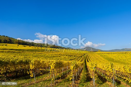 925850210 istock photo Vineyards of alsace - close to small village Hunawihr, France 621362984