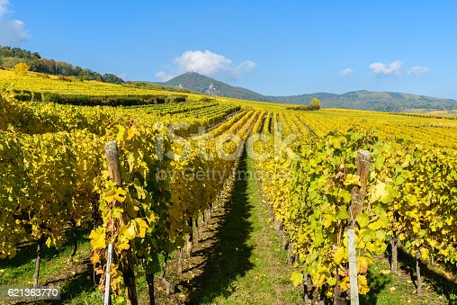 925850210 istock photo Vineyards of alsace - close to small village Hunawihr, France 621363770