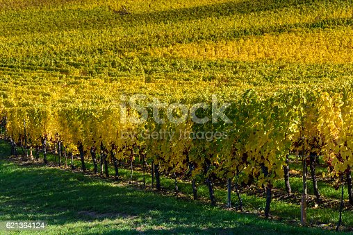 925850210 istock photo Vineyards of alsace - close to small village Hunawihr, France 621364124
