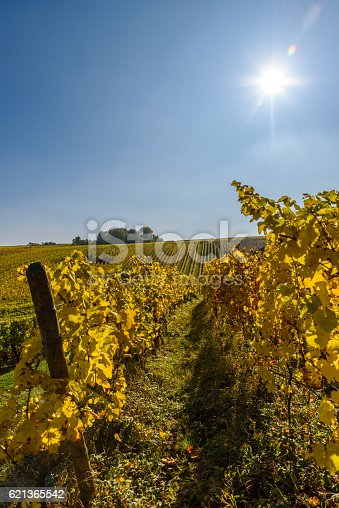 925850210 istock photo Vineyards of alsace - close to small village Hunawihr, France 621365542