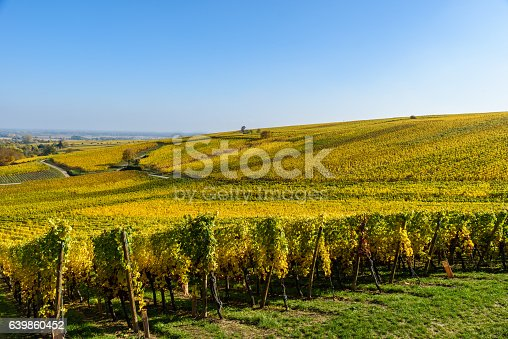 925850210 istock photo Vineyards of alsace - close to small village Hunawihr, France 639860452