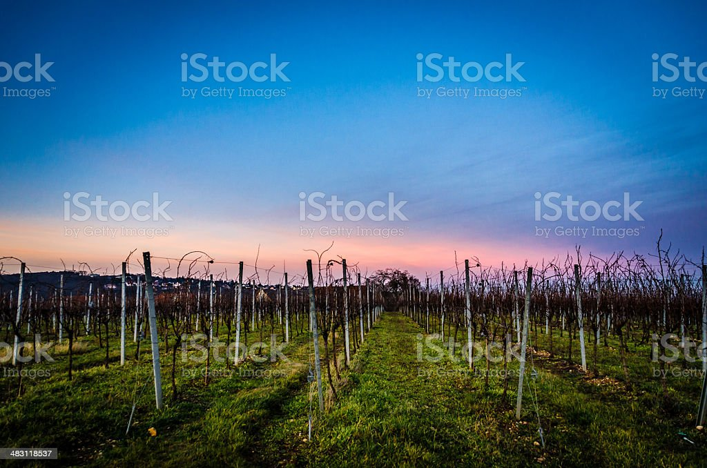 Vineyards of Alsace stock photo