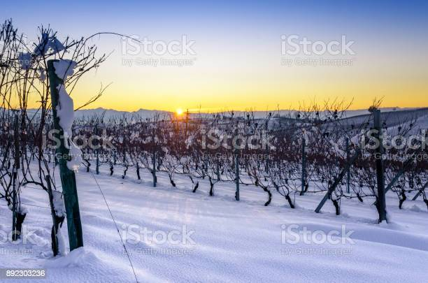 Photo of Vineyards of Barolo in the hills of Langhe, (Piedmont, Italy) at sunset with snow