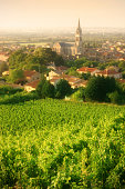 Vineyards overlooking the wine producing village of Cornas, in the Rhône Valley, France