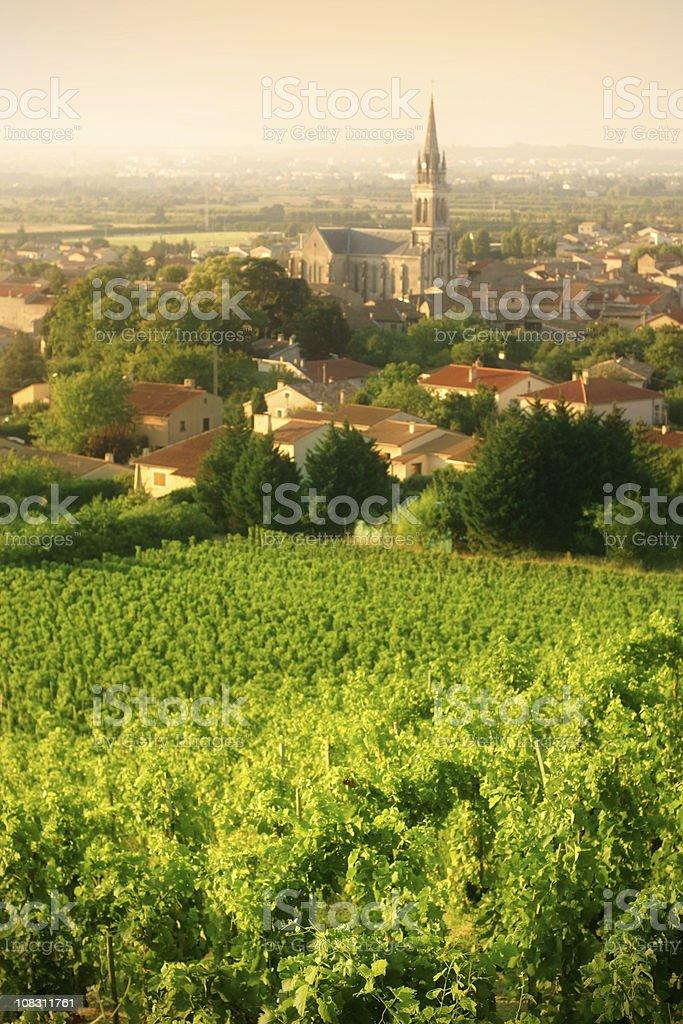 Vineyards of Cornas stock photo