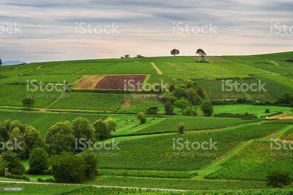vineyards of Cote Chalonnaise region, Burgundy, France stock photo