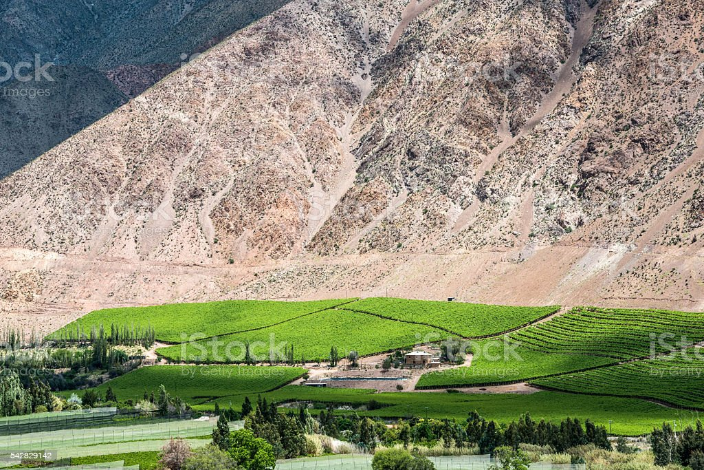 Vineyards of Elqui Valley, Atacama Desert, Chile stock photo