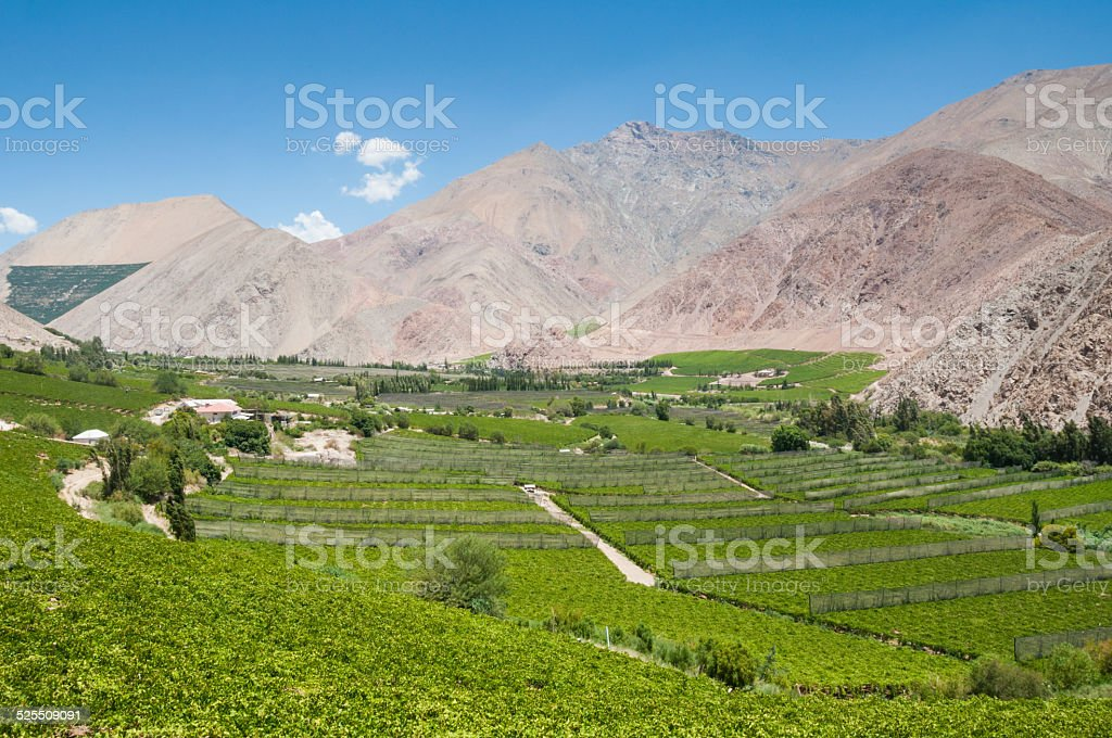 Vineyards of Elqui valley, Chile stock photo