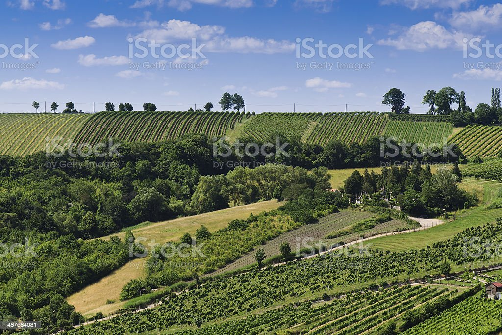 Vineyards of Kahlenbergerdorf in summer, Vienna, Austria, Europe stock photo