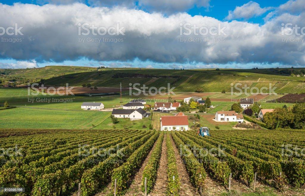 Viñedos Del Valle Del Loira Francia Foto De Stock Y Más Banco De Imágenes De Agricultura Istock