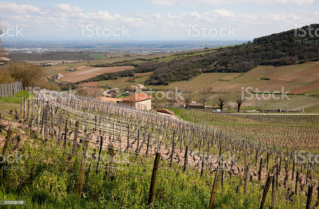 Vineyards of Macon, France in April stock photo
