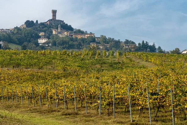 Vinhedos de Oltrepo Pavese, Italy, na queda - foto de acervo