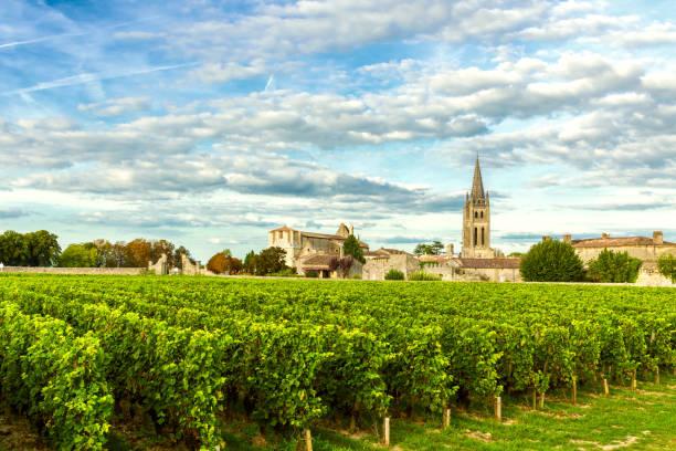 winnice saint emilion, winnice bordeaux we francji - francja zdjęcia i obrazy z banku zdjęć
