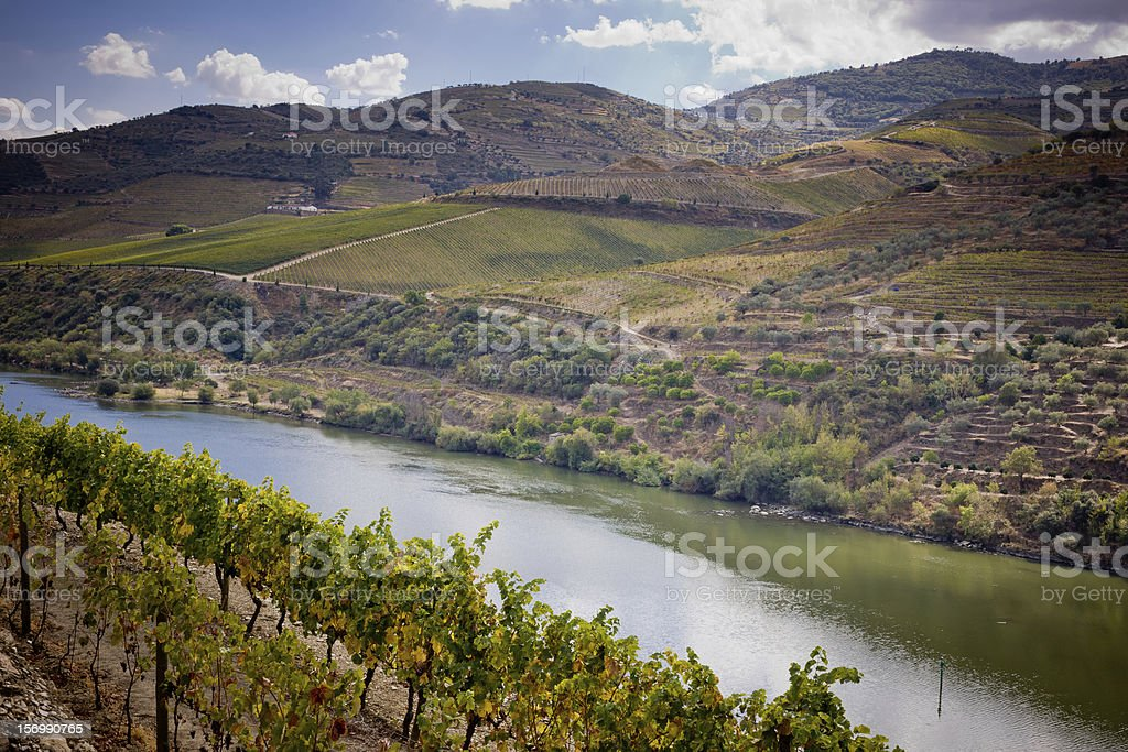 Vineyards of the Douro Valley, Portugal royalty-free stock photo