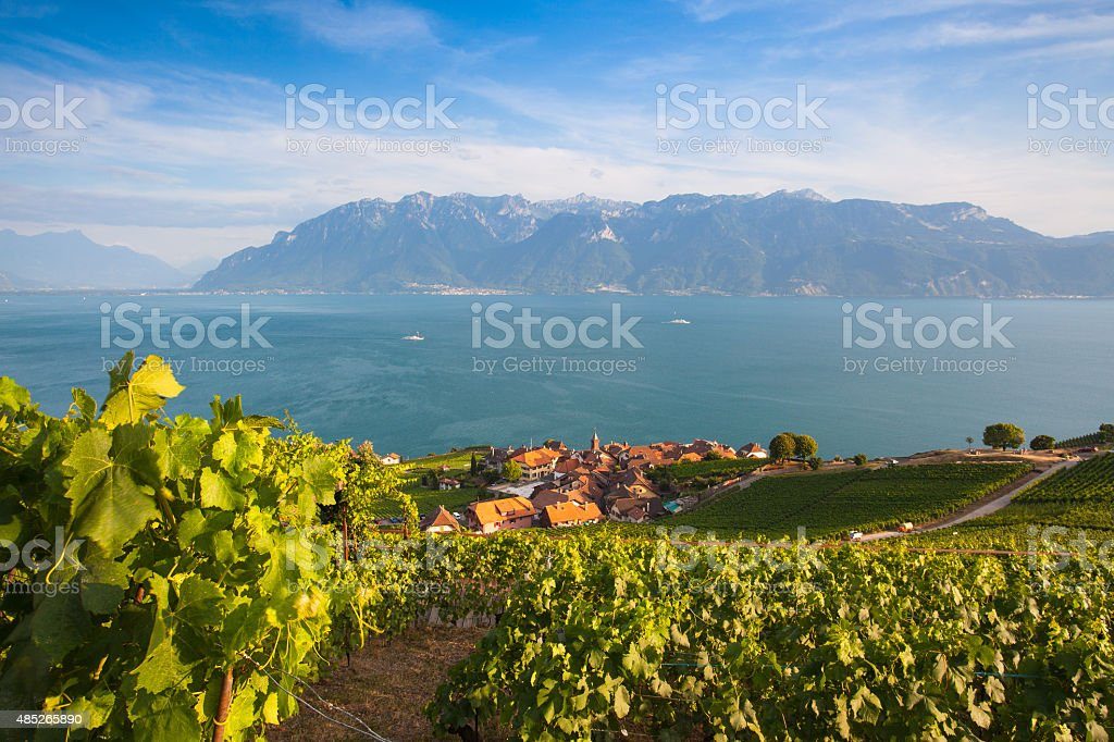 Vineyards of the Lavaux region,Switzerland stock photo
