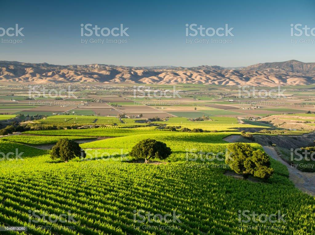 Vineyards of the Santa Lucia Highlands - Aerial Shot stock photo