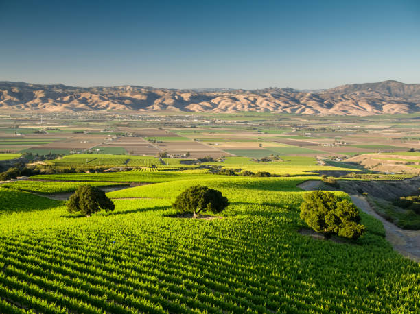 Vineyards of the Santa Lucia Highlands - Aerial Shot stock photo