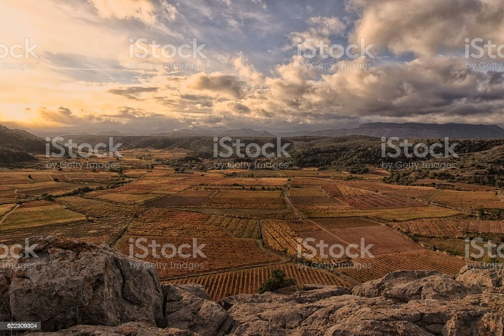 Vignes de Vingrau stock photo