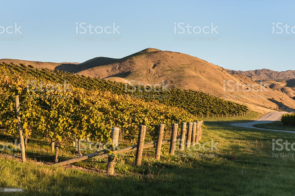 vineyards on slope stock photo
