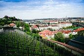 Vineyards On The Hill Above Prague, Czech Republic