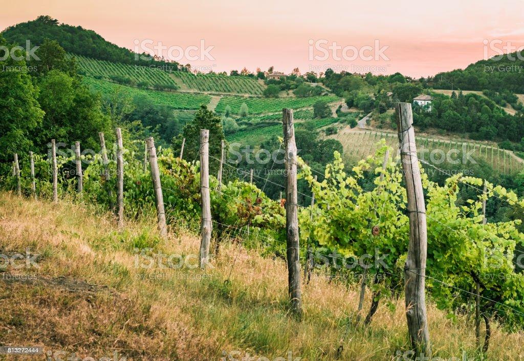 vineyards on the hills stock photo