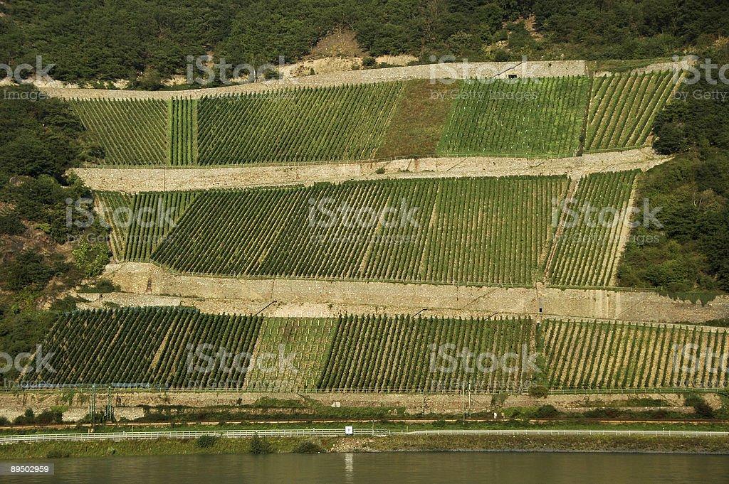 Vineyards on the Rhine royalty-free stock photo