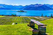 Vineyards on the shore slopes of the lake. Exotic journey to the South Island of New Zealand. Fabulously beautiful Lake Wanaka. Concept of active, photo and ecological tourism