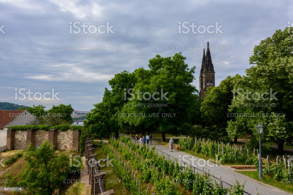 Vineyards on the slopes of the castle Vysehrad in Prague stock photo
