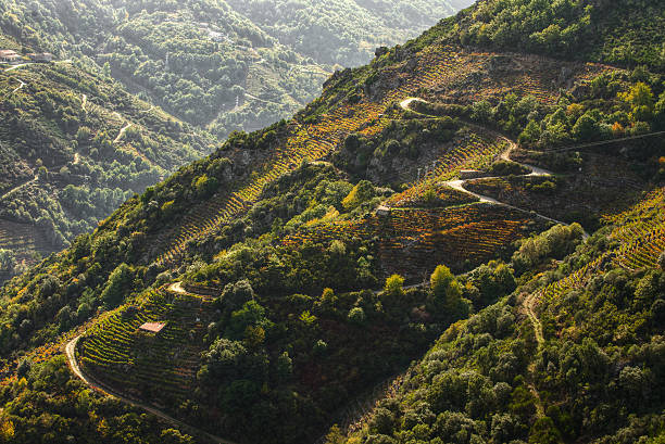 vineyards on the slopes Ribeira Sacra vineyards on the slopes of Sil river, Sober, Ribeira Sacra, Galicia galicia stock pictures, royalty-free photos & images