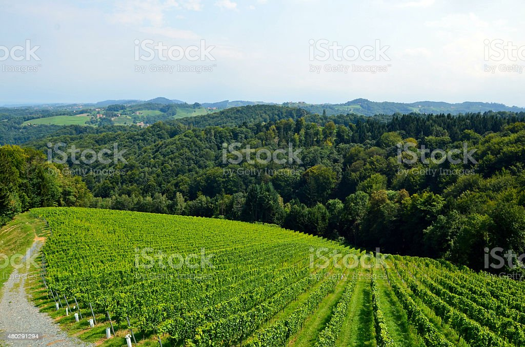Vineyards on the wine route near Gamlitz in the summer stock photo