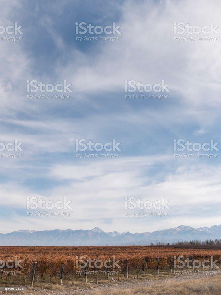 Viñedos - foto de stock