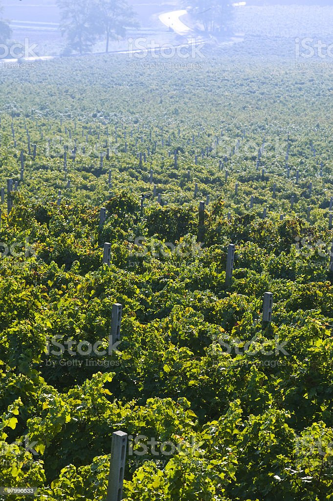 vineyards royalty free stockfoto