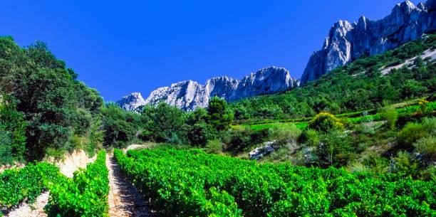 vineyards provence - cotes du rhone sunshine summer france - shot on film stock photo