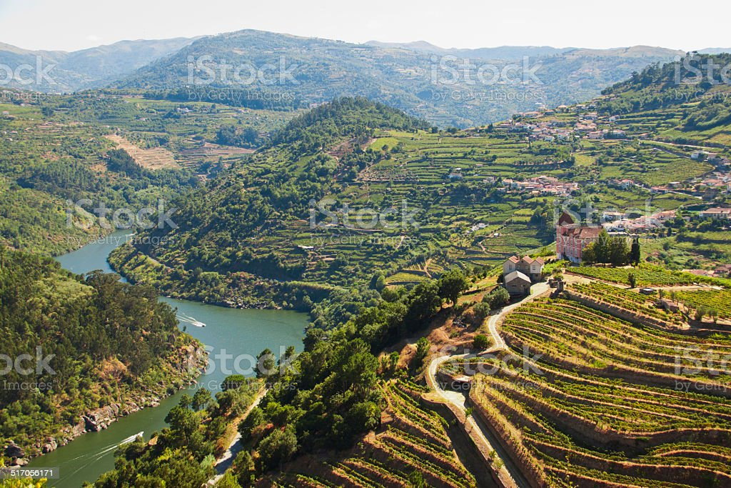 vineyards ribeira do Douro stock photo