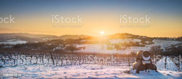 Photo of Vineyards rows covered by snow in winter at sunset. Chianti, Siena, Italy